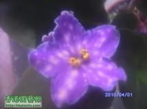 四月花~updated 27/04
