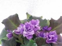 油畫色的av- new violet 2013