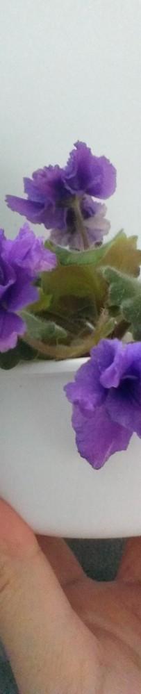 violet 2013-nov