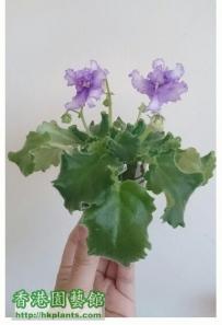 Violet 2012- 6小姐