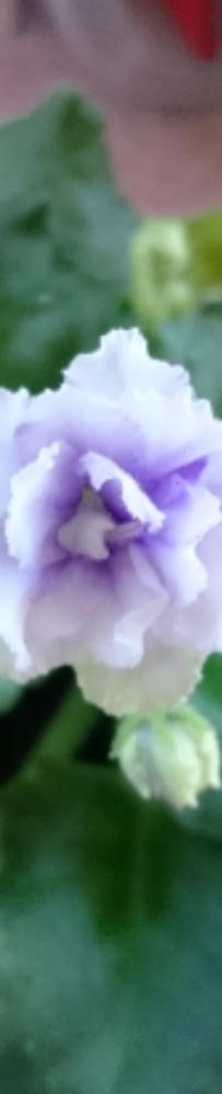 Violet 2012- 6胞胎…老大