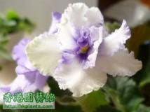 new violet....2012